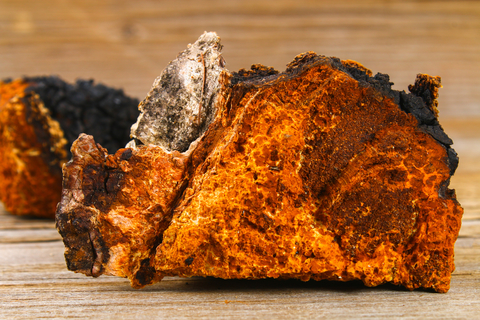 Cross-section of Chaga