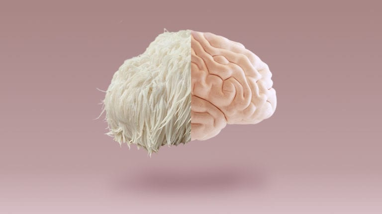 Lion's Mane Brain blog header